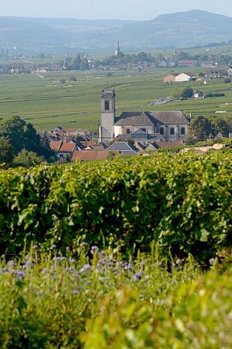 Pommard and Meursault