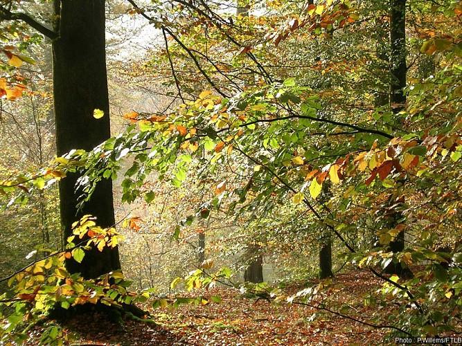 Au travers du Parc Naturel Haute-Sûre Forêt d'Anlier