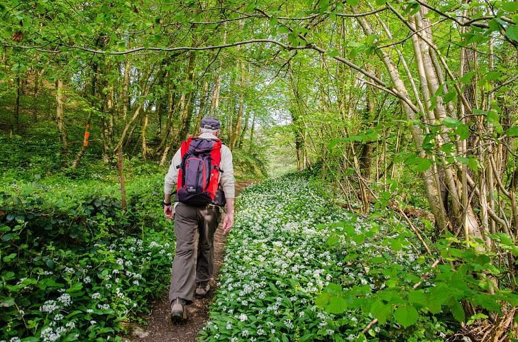 La Grande Traversée de la Forêt du Pays de Chimay / Sivry-Philipeville