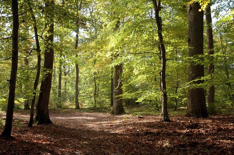 Stevenson Trail
