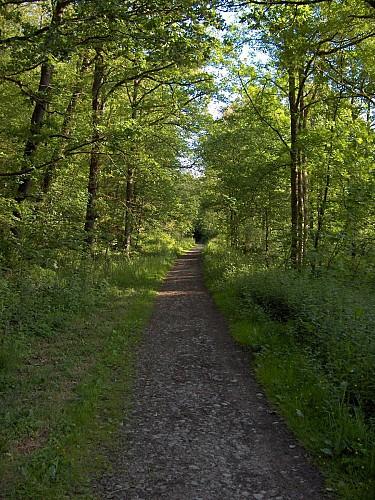 Circuit cyclotouristique 'Le massif forestier'
