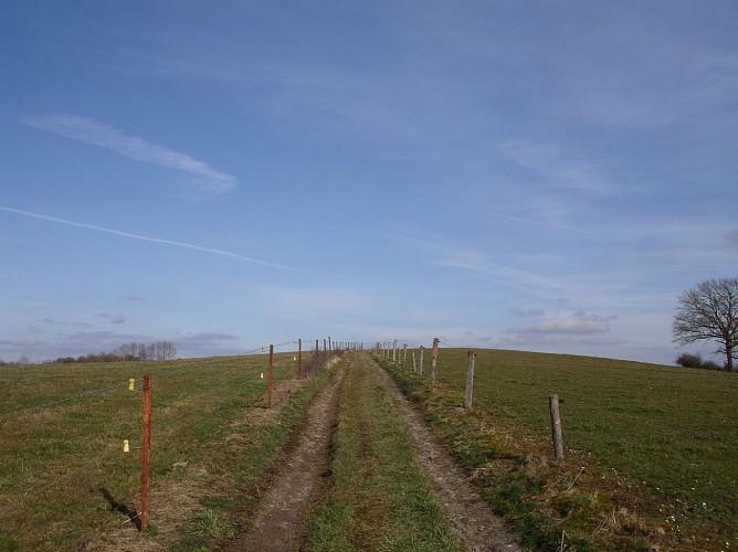 Marche-en-Famenne - Circuit VTT Vert