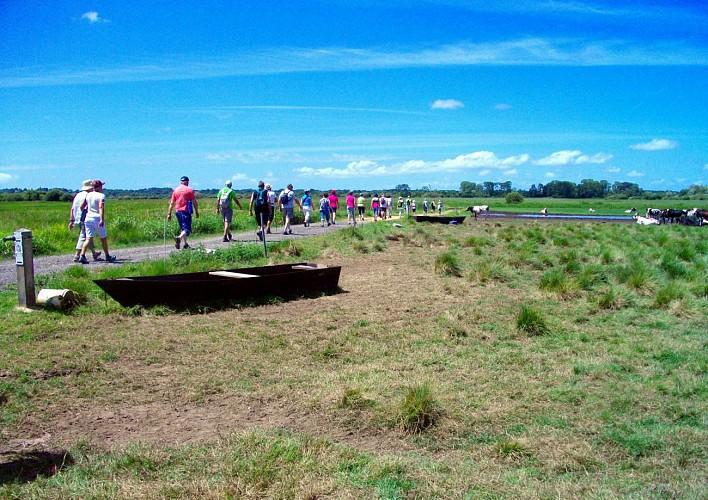Parcours marche les marais saint philbert de grand lieu for Piscine saint philbert de grand lieu