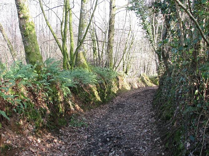 Circuit n°7 : Le Bois Joli - Commune de St Denis de Gastines