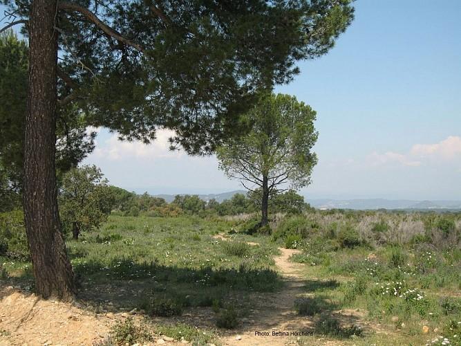 La Mourre, la Nible et les Maximins - Rando 7