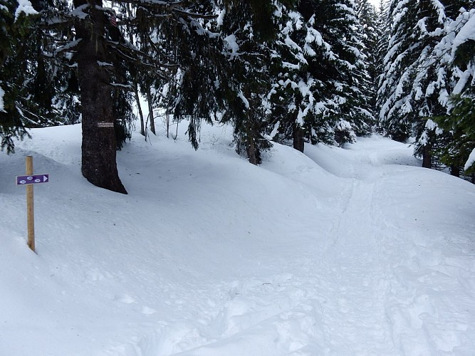 Circular footpath Mont d'Arbois to Pettoreaux