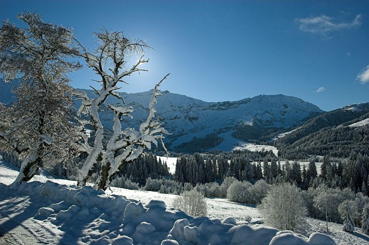 vue_hiver