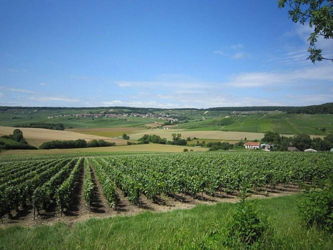 vue sur la vallée du Brunet