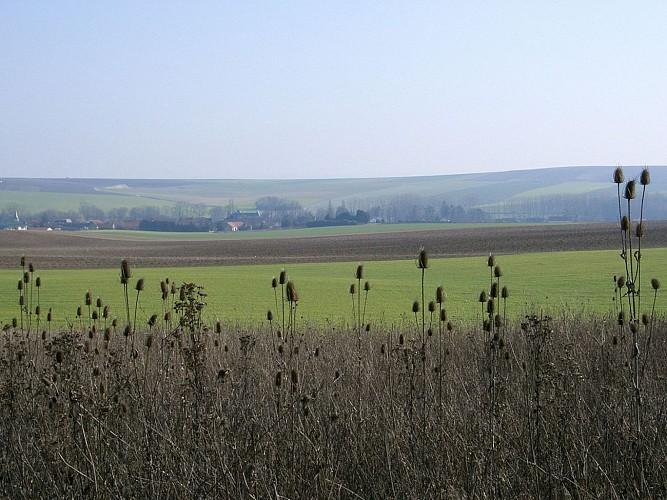 Vue de Tauxières-Mutry.
