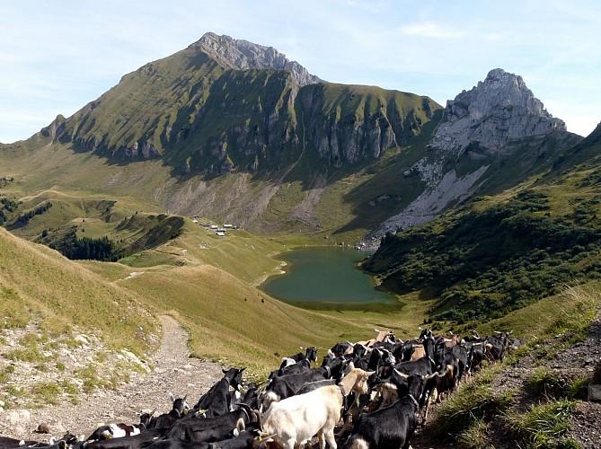 Tour Massifs Tournette Aravis.GR®P. Refuge de Gramusset / Gite d'étape Les Sapins Entremont (777m). Etape 06
