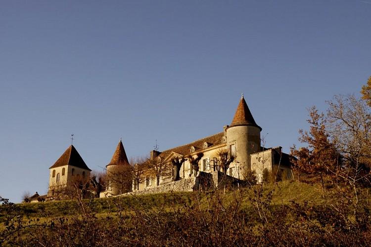 Paysages et Vignobles - Villefranche de Lonchat