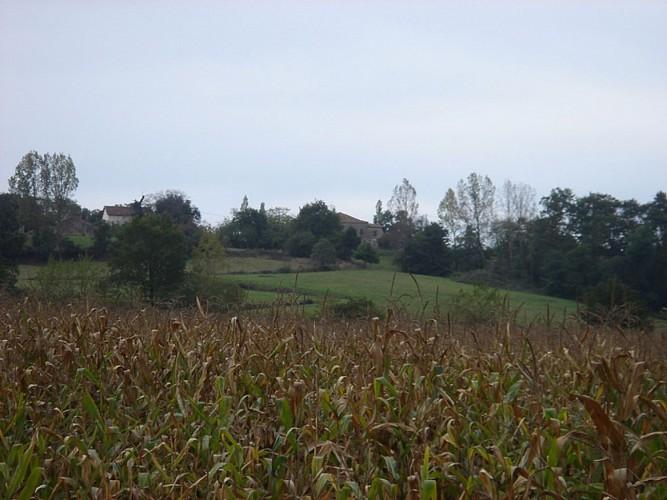 A Brassempouy, circuit des landes de Herrères