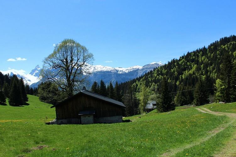 Sentier Haute Combe par Les Molliets