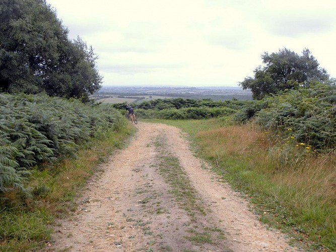 Photo N°4_Sentier Les Moitiers d'Allonne 019