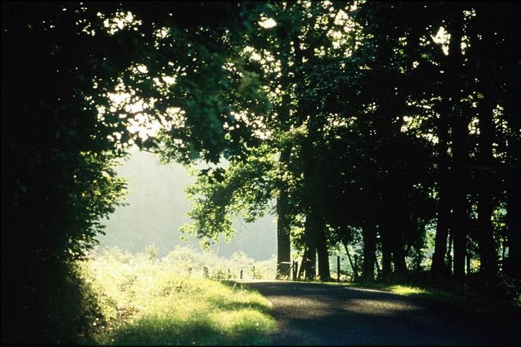 Le Bois Geraudel à VTT