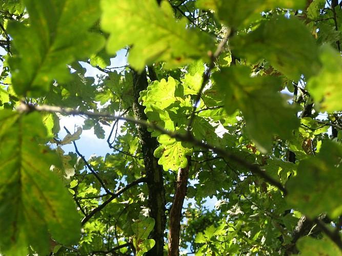 Le chêne creux à VTT