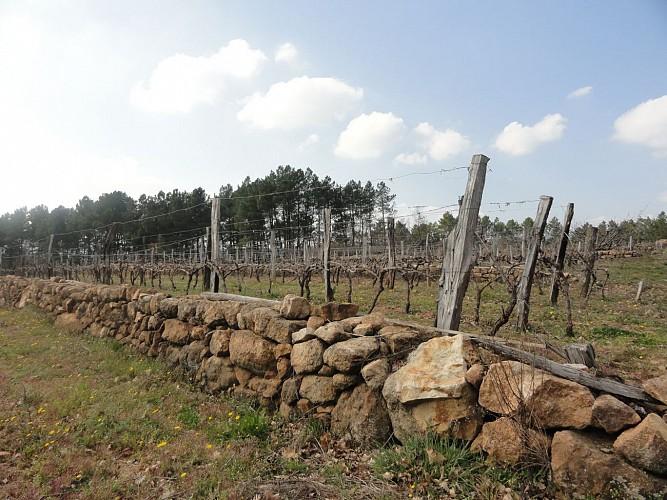 vignes balbiac