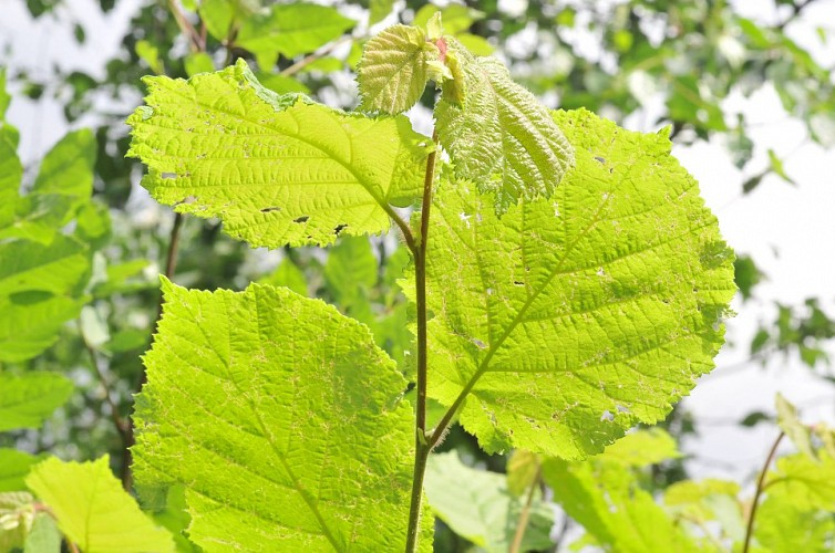 Biodiversité de la Forêt Régionale de Ferrières