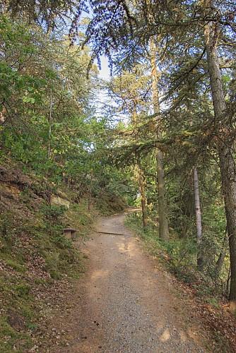 Les sentiers du Mont Chalusset