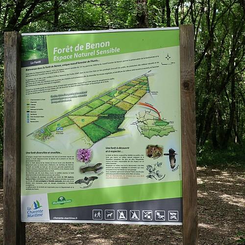 La forêt de Benon