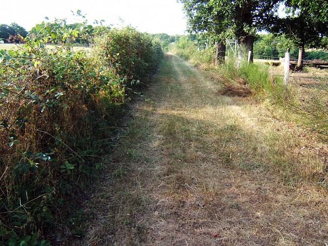 Chemin des deux moulins