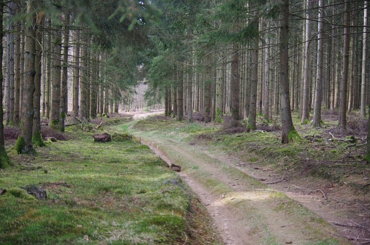 Les Sentiers des cerfs