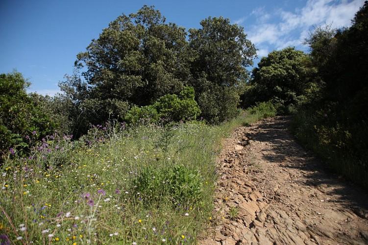Immersion au coeur de la nature : Balade sur le sentier du Fenouillet à #Cavalaire