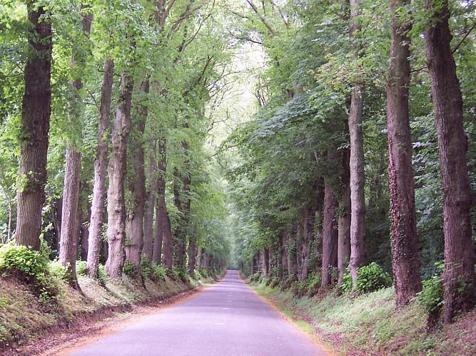 Sentier du Loup (Berlencourt-le-Cauroy)