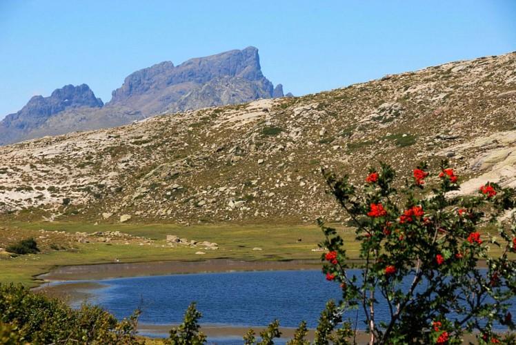 Corse- Région Cinarca/Cortenais- Lac de Nino par lac de Creno [août 2009]