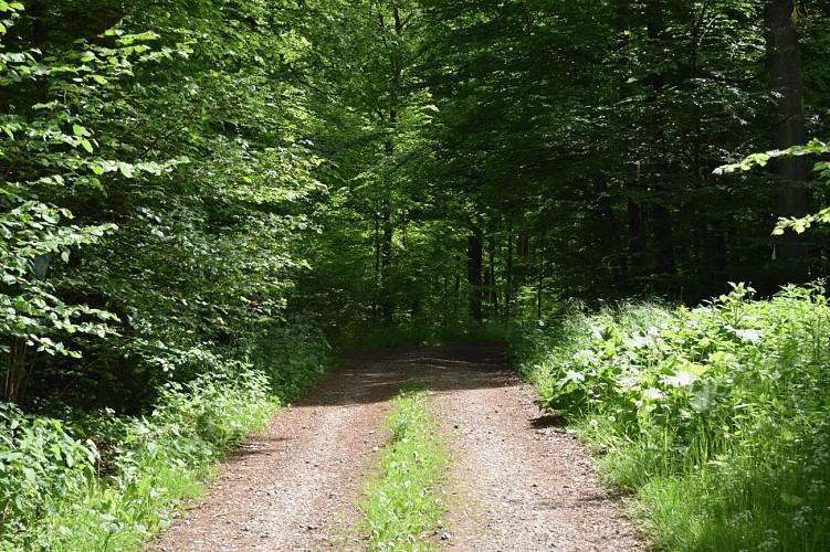 Udange. Pénétrez dans la forêt primitive pour une balade sauvage !