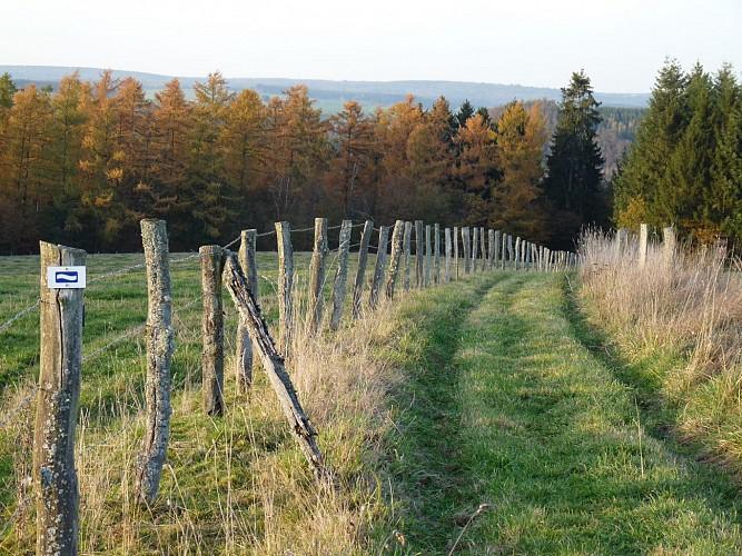 Escapardenne Eislek Trail - Etape 4 - Houffalize - Nadrin