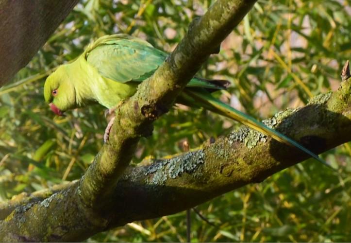 Parcours pédestre à la découverte de la biodiversité au Vésinet en 8 étapes.
