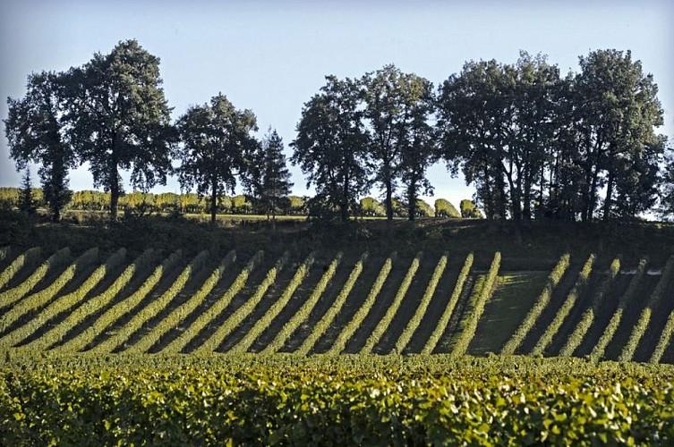 Boucle autour de la vigne à Colombier