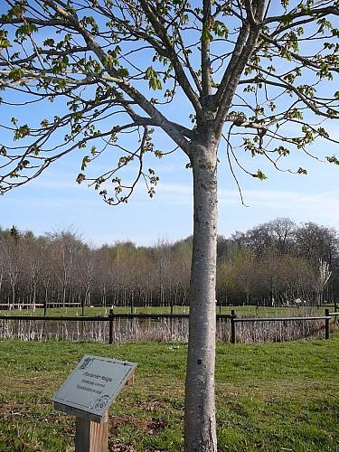 Frassem and his Arboretum