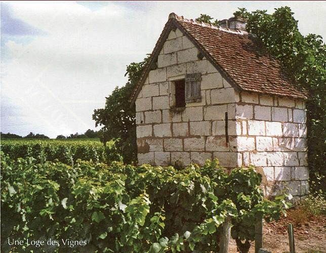 Chemin des loges de vigne -Seigy
