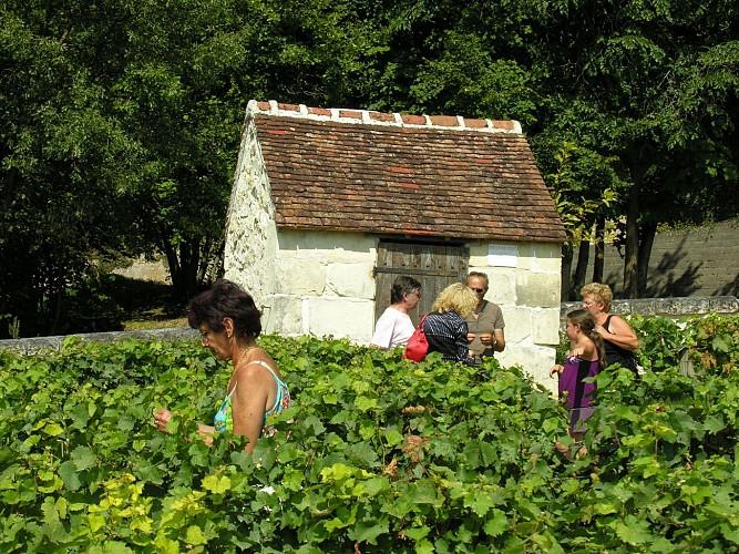 Chemin des vignes - Châteauvieux