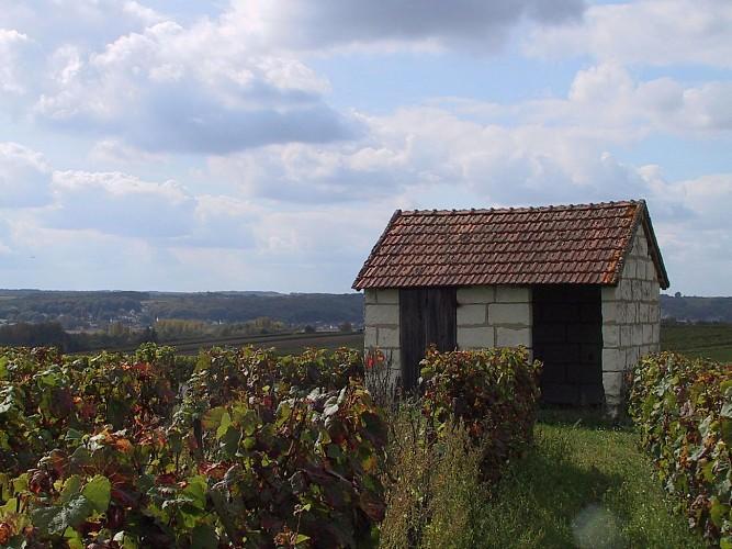 Sentier du Trainefeuilles - Saint-Aignan