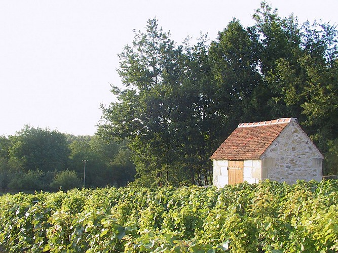 De la Bruyère du Curé - Saint-Aignan