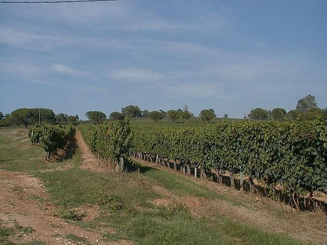 Sentier des Châtaigniers - Lembras