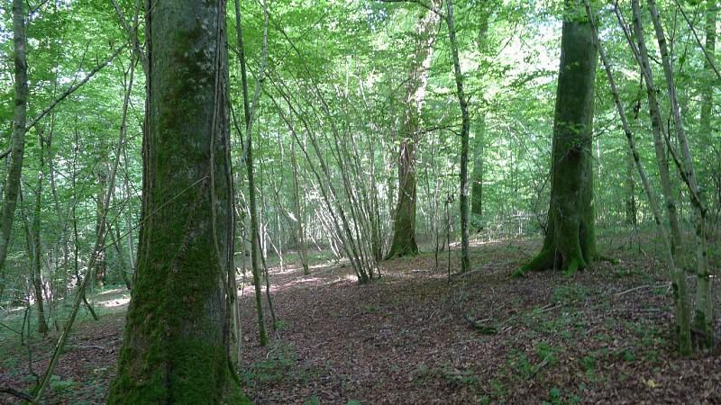 """La """"Cour des grands (arbres)"""""""