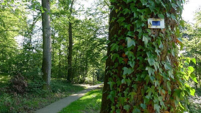 Le Joli Bois à Athus