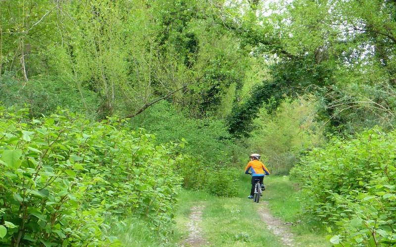 Circuit vélo 1 : Boucle du Gave et de la saligue
