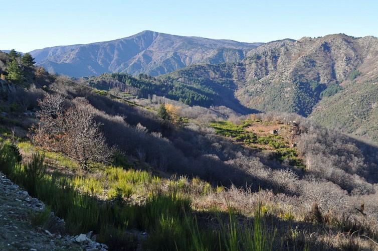 le massif de l'Aigoual