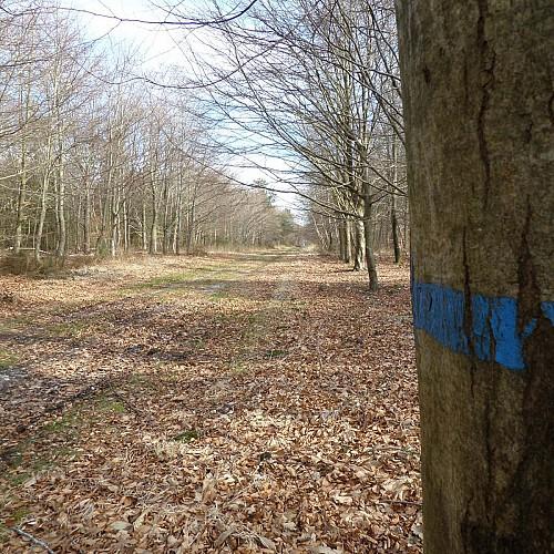 Allée forestière (lande)