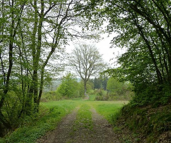 Les paysages cachés - Tronçon 1 Kautenbach - Wiltz