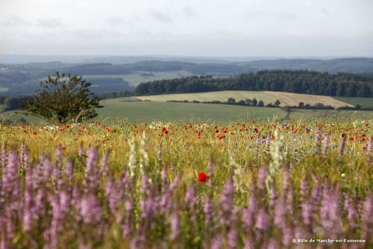 Walk through the Hedrée valley