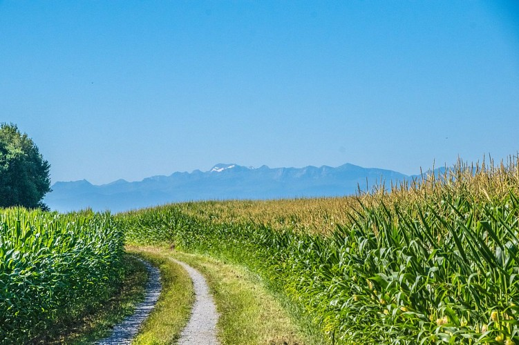 Bougarber - Plaine de l'Uzan