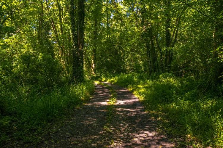 Siros - Le sentier du gave
