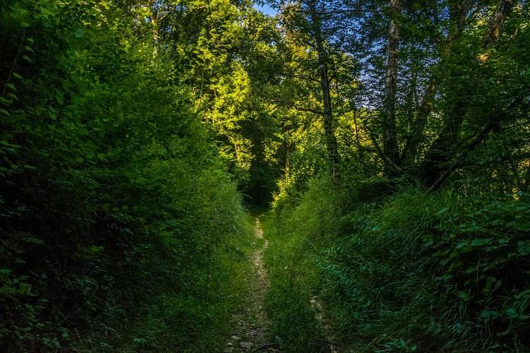Aubertin - De la Hélère à la Baïse