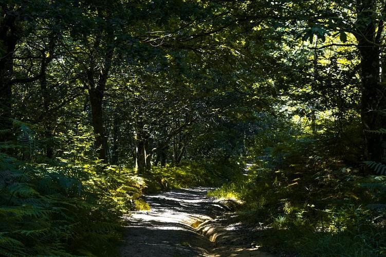 Arbus - Les coteaux du bois de bas